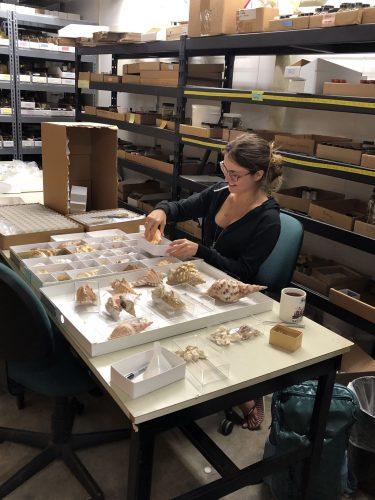 Eve rehousing dry specimens
