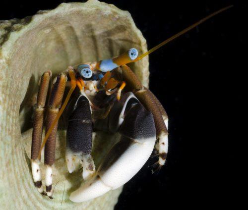specimen photo