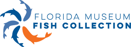 Fish Collection Logo