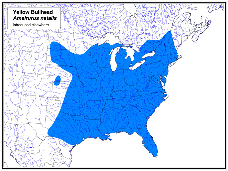 Yellow Bullhead map
