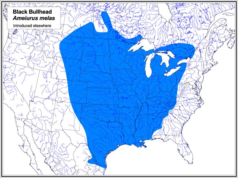 Black Bullhead map