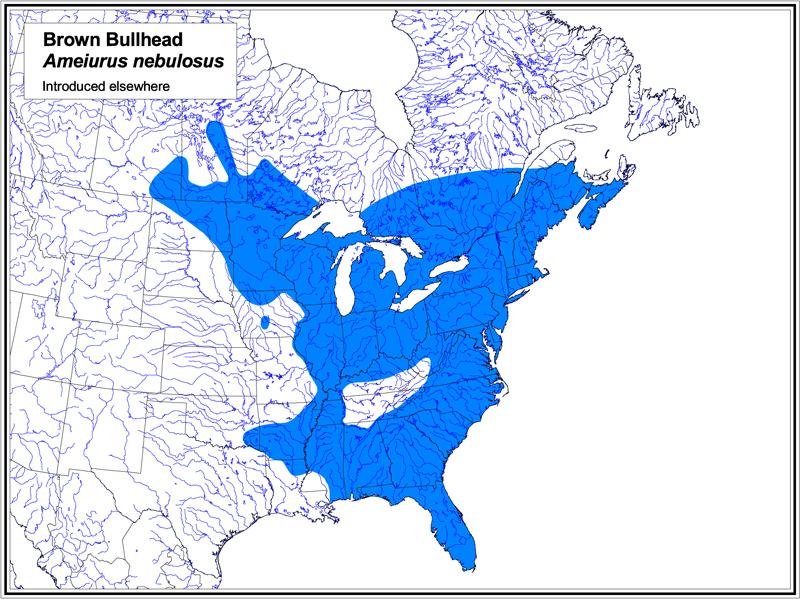 Brown Bullhead map