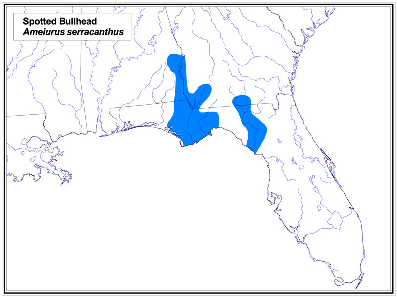 Spotted Bullhead map