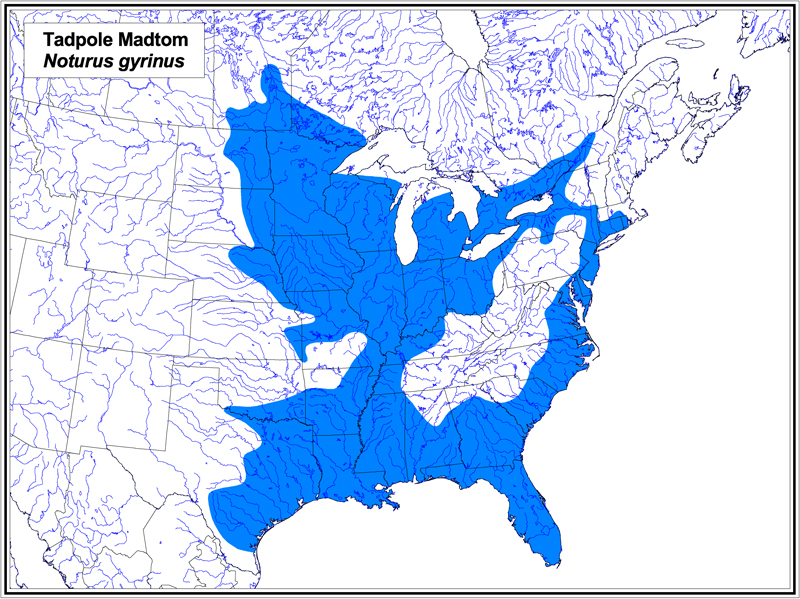 Tadpole Madtom map