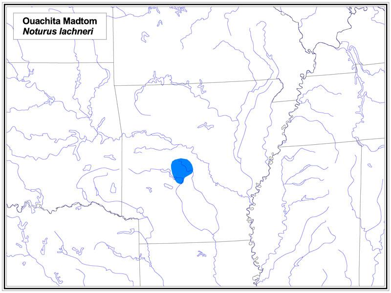 Ouachita Madtom map