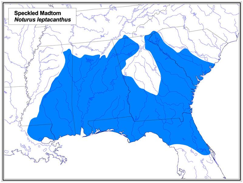 Speckled Madtom map
