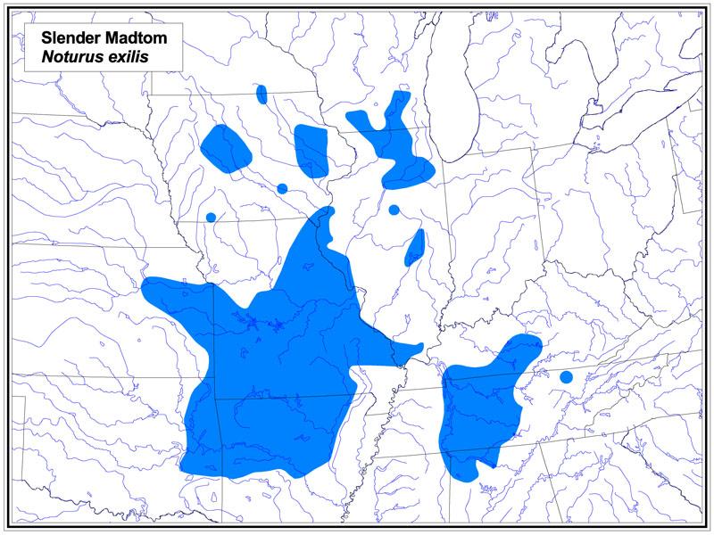 Slender Madtom map