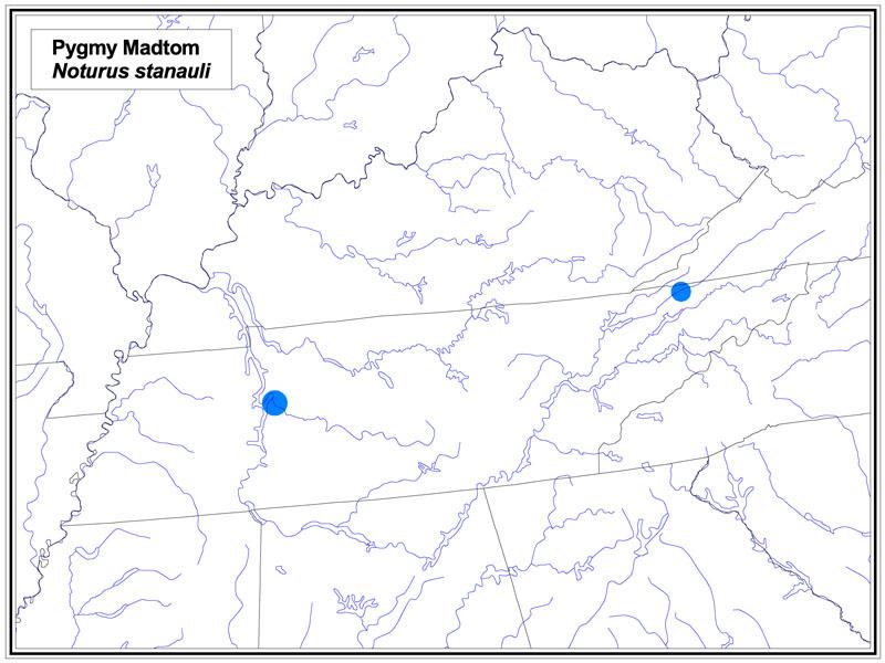 Pygmy Madtom map