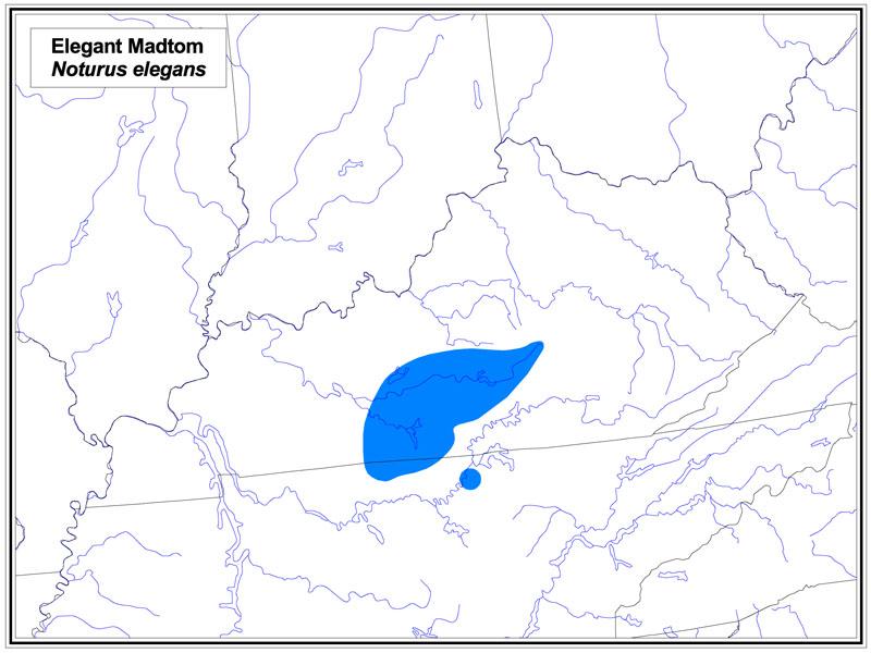 Elegant Madtom map