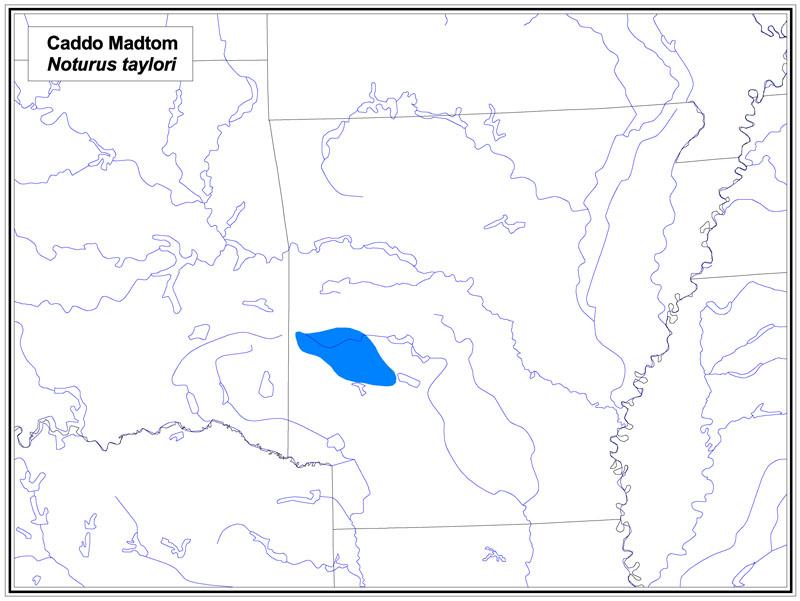 Caddo Madtom map