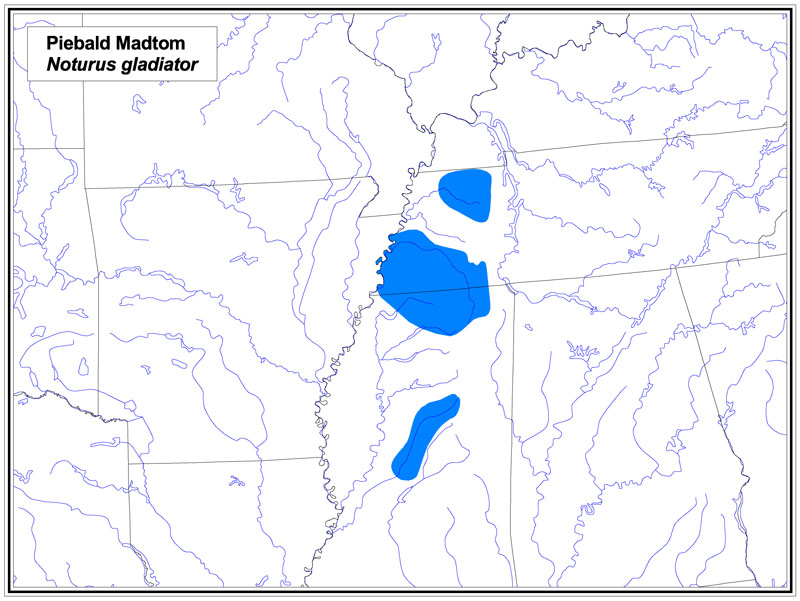 Piebald Madtom map
