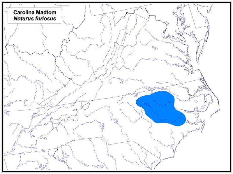 Carolina Madtom map