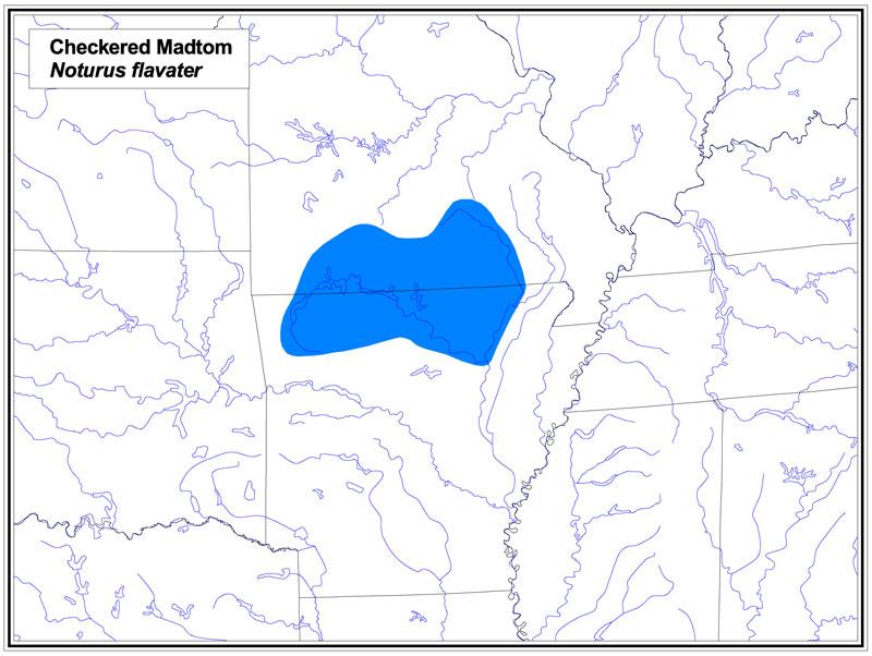 Checkered Madtom map