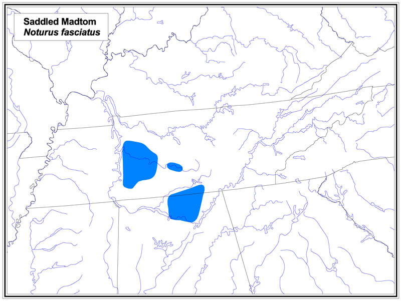 Saddled Madtom map