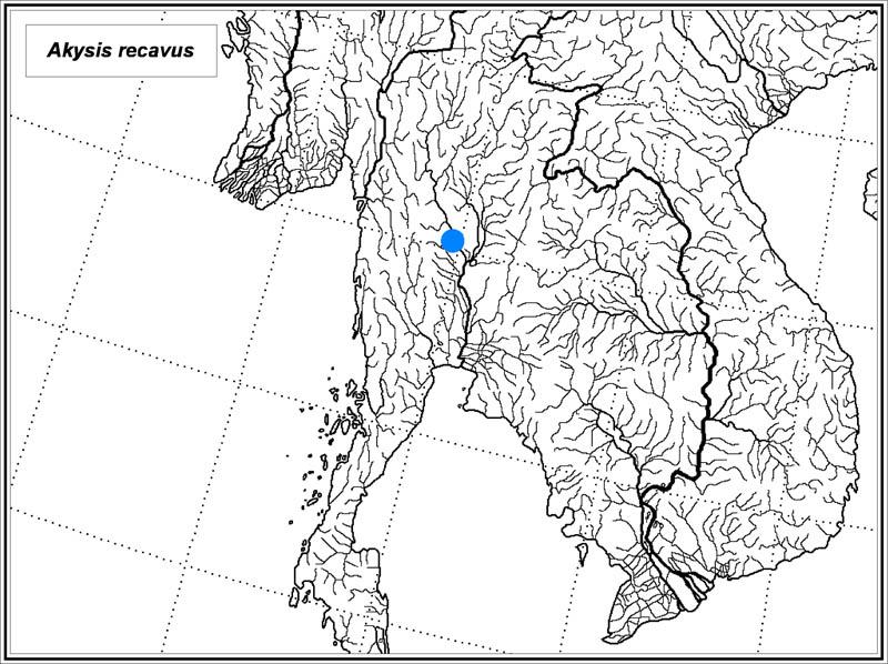 Akysis recavus map