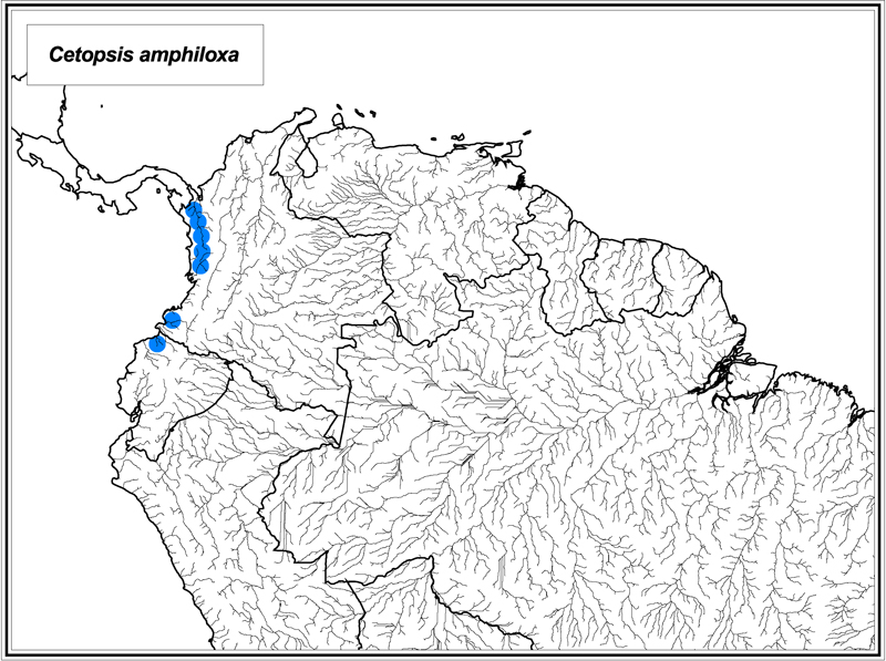 Cetopsis amphiloxa map