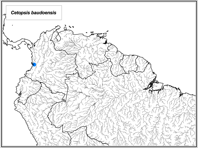 Cetopsis baudoensis map