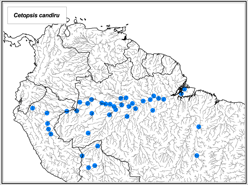 Cetopsis candiru map