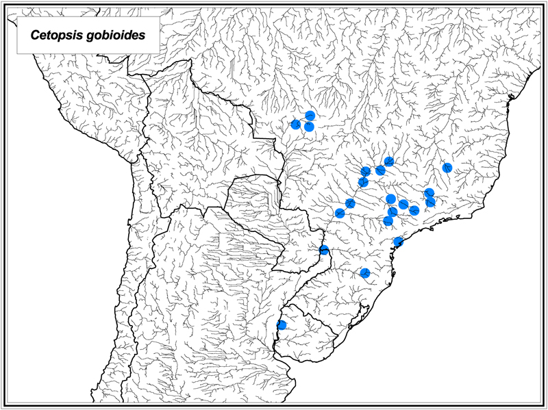 Cetopsis gobioides map