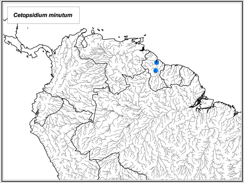 Cetopsidium minutum map