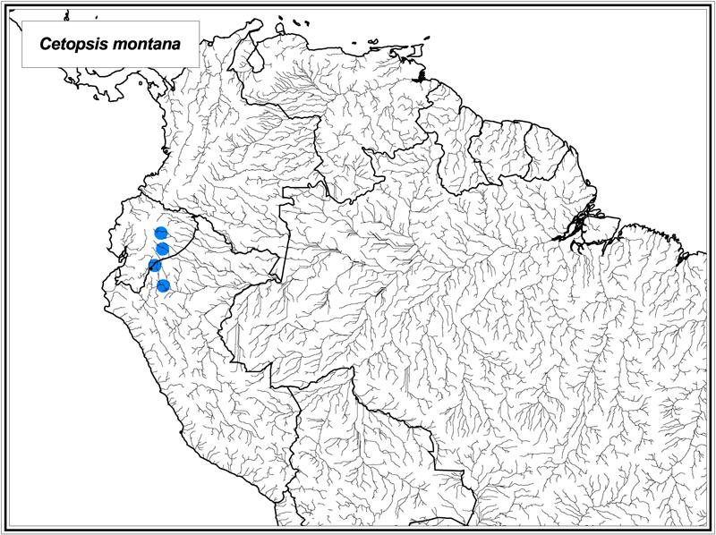 Cetopsis montana map