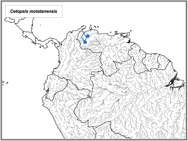 Cetopsis motatanensis map