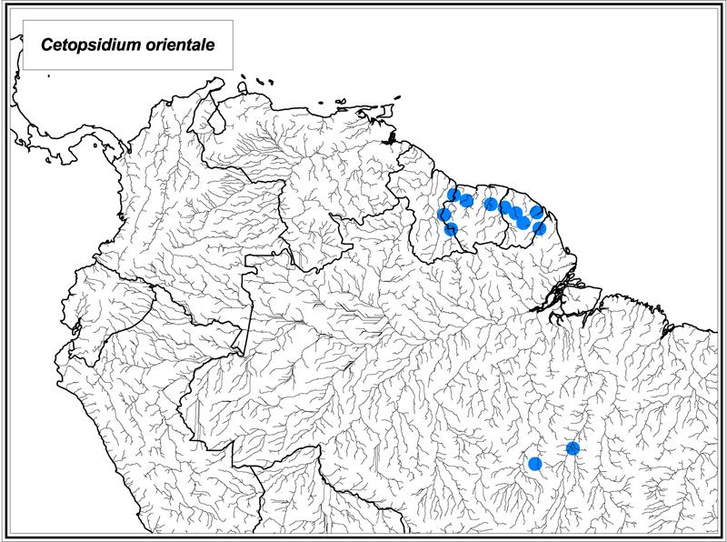 Cetopsidium orientale map