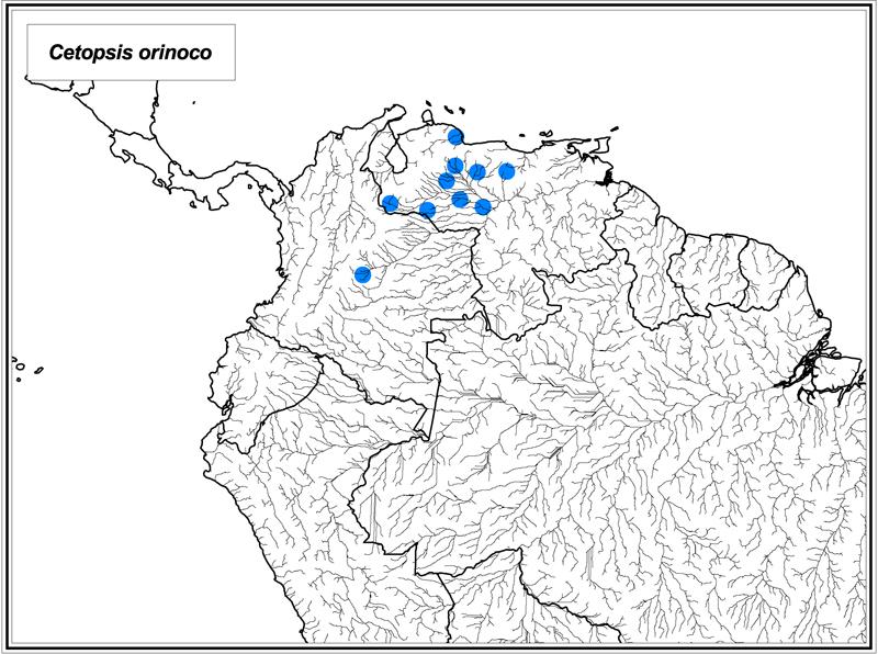 Cetopsis orinoco map