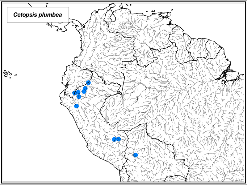 Cetopsis plumbea map