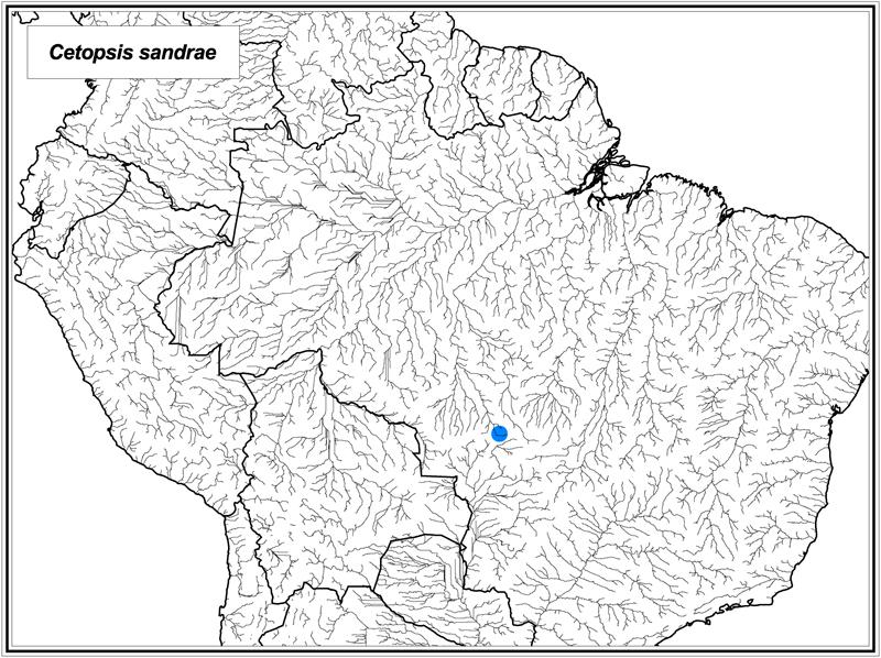 Cetopsis sandrae map