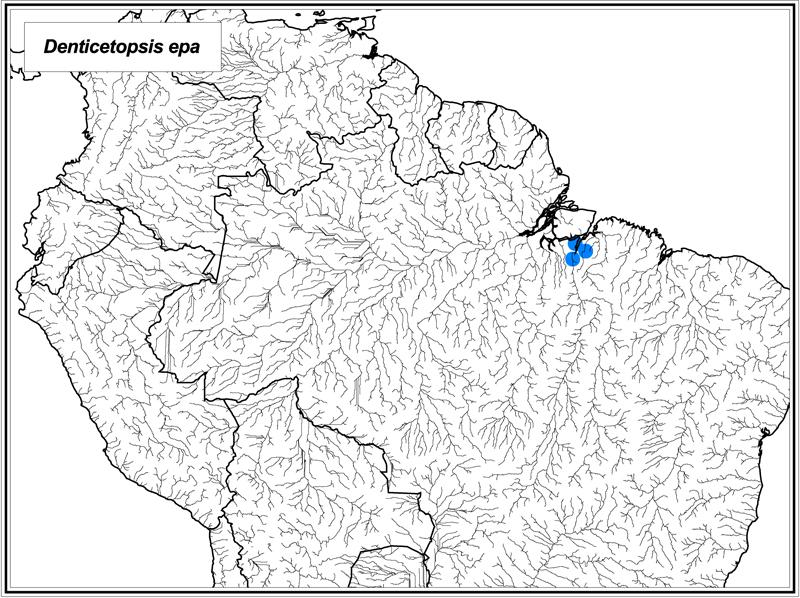 Denticetopsis epa map