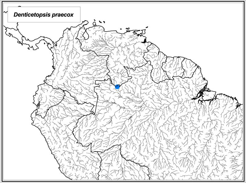 Denticetopsis praecox map