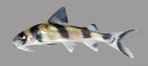 A lateral view of a fish