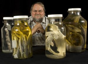 George Burgess, director of the Florida Program for Shark Research at the Florida Museum of Natural History, displays shark specimens in Dickinson Hall on the University of Florida campus. ©Florida Museum of Natural History photo by Eric Zamora