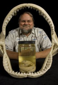 George Burgess, director of the Florida Program for Shark Research at the Florida Museum of Natural History, displays a dusky shark jaw and sharpnose shark embryo specimens in Dickinson Hall on the University of Florida campus. ©Florida Museum of Natural History photo by Eric Zamora