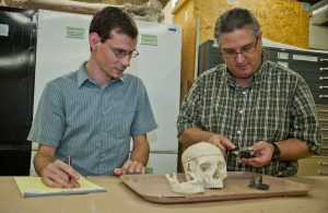Florida Museum researchers Zachary Randall, left, and Jonathan Bloch compare anatomical traits of Notharctus tenebrosus, an extinct primate from the Eocene, with characteristics of a Homo sapiens skull. Photo by Jeff Gage
