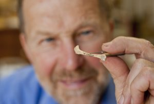 Ornithologist David Steadman examines a fossil coracaid, or shoulder bone, of an undescribed, extinct new species of woodcock found in the Trouing Jean Paul site in southeast Haiti. University of Florida by Kristen Grace