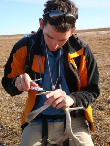 Joshua Miller, an assistant scientist at the Florida Museum of Natural History on the University of Florida campus and Fenneman assistant research professor at the University of Cincinnati, measures a shed caribou antler on the calving grounds of the Arctic National Wildlife Refuge in Alaska.  Photo by Eric Wald, Arctic National Wildlife Refuge