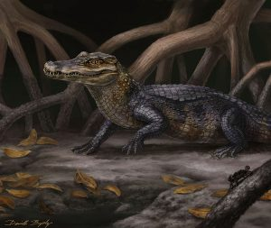 This reconstruction of Culebrasuchus mesoamericanus represents a new primitive species University of Florida researchers believe may represent an evolutionary transition between caimans and alligators. Florida Museum of Natural History illustration by Danielle Byerley