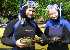 UF researchers Joseph Tavano and Amber Pitt hold a northern map turtle and two red-eared sliders caught in the North Fork of White River in Ozark County, Mo. Photo by Charles Hoessle, St. Louis Zoo.