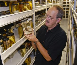 Larry Page, ichthyology curator at the Florida Museum of Natural History. ©Florida Museum Photo by Jeff Gage