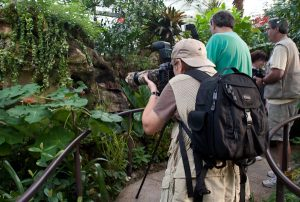 "Photographers at the ""Butterfly Rainforest"" exhibit at the Picture Perfect Photography Contest during ButterflyFest 2012. Florida Museum of Natural History photo by Kate Martin"