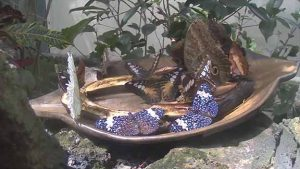 This still image was taken from the feeding station webcam in the Butterfly Rainforest exhibit.