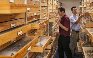 Florida Museum of Natural History researchers Rob Guralnick and Akito Kawahara work in the McGuire Center for Lepidoptera and Biodiversity collections. ©Florida Museum of Natural History photo by Kristen Grace