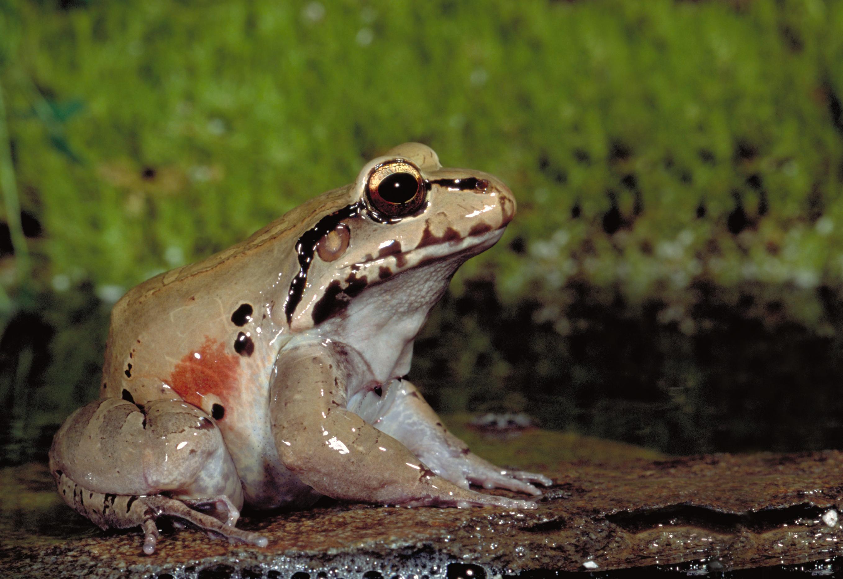 frogs a chorus of colors u2013 pressroom