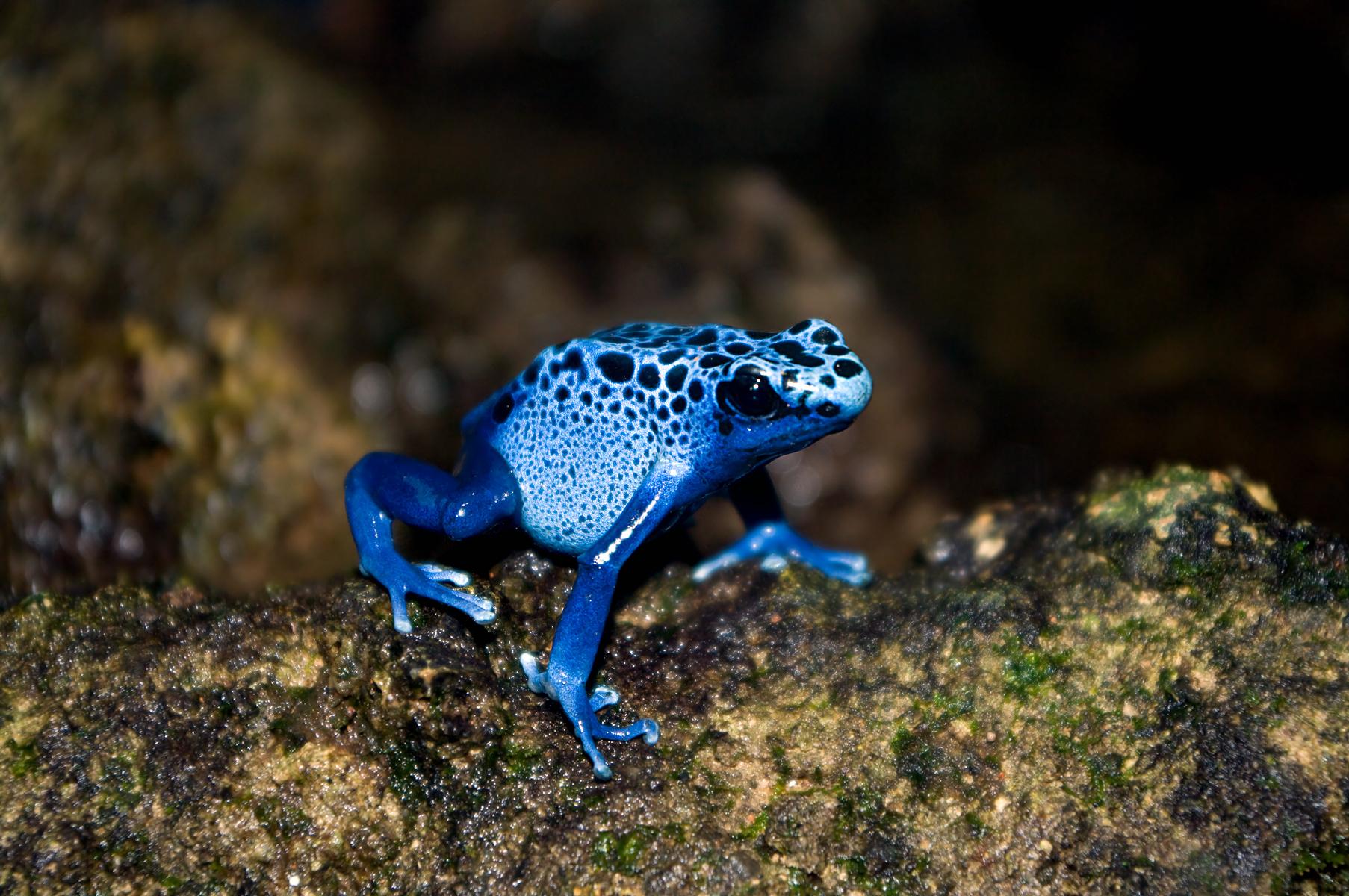 new frogs featured exhibit opens jan 28 pressroom