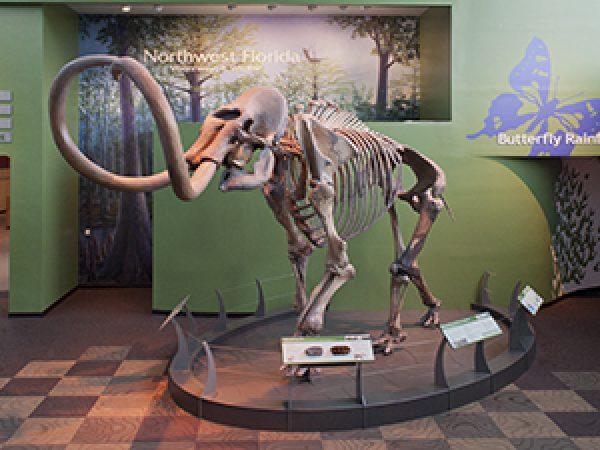 mammoth in denny gallery