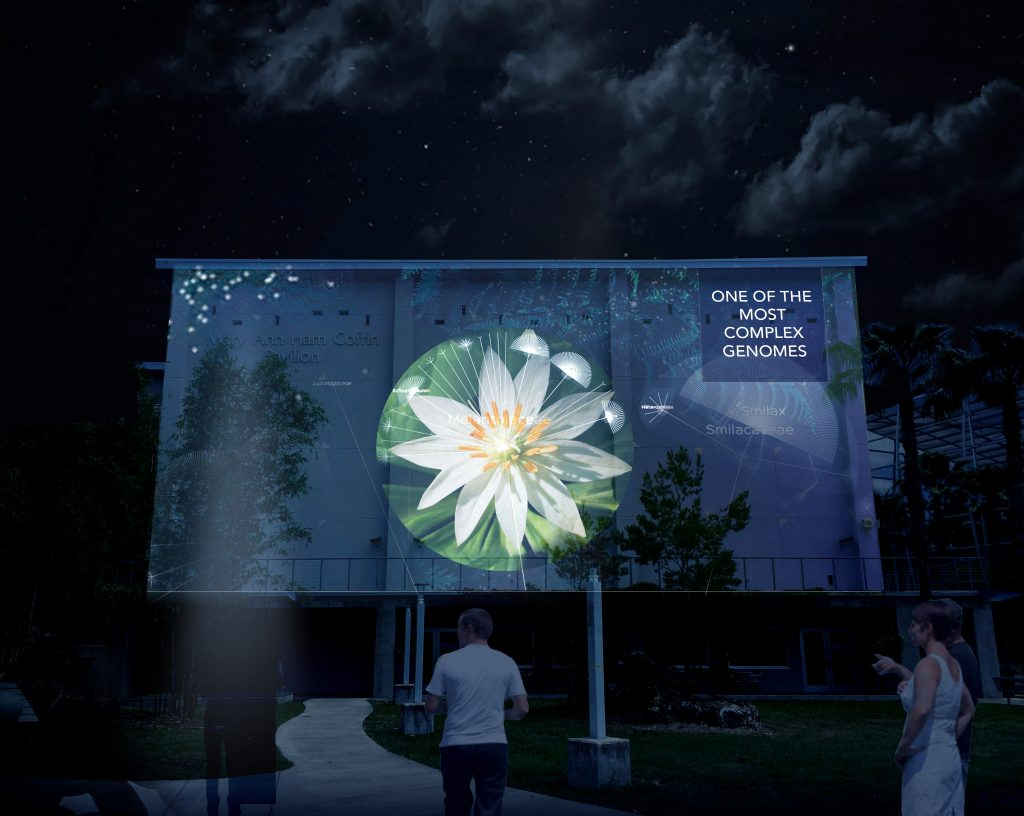 An interactive digital video projection of the tree of Life will be displayed on the west exterior wall of the Harn Museum of Art. Image courtesy of Naziha Mestaoui