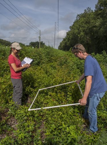 Museum research technician Kristin Rossetti and postdoctoral research associate Josh Campbell conduct a vegetation survey in a utility right of way. Florida Museum photo by Jeff Gage