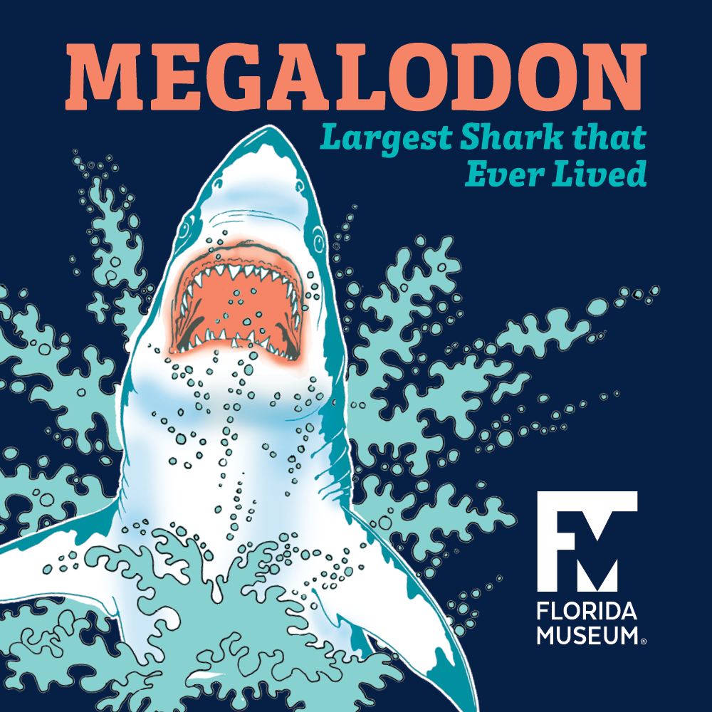 Megalodon Graphic